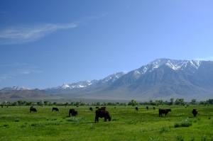 If I were a cow this is where I'd want to live.